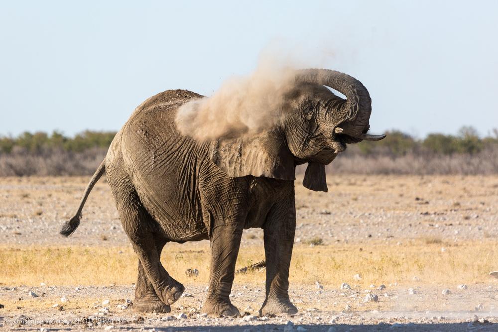 Namibie- 8068.jpg