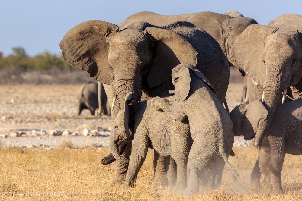 Namibie- 7286.jpg