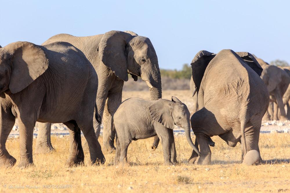 Namibie- 7304.jpg