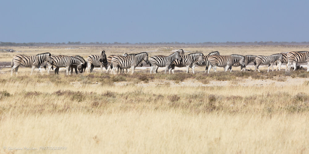 Namibie- 7791.jpg