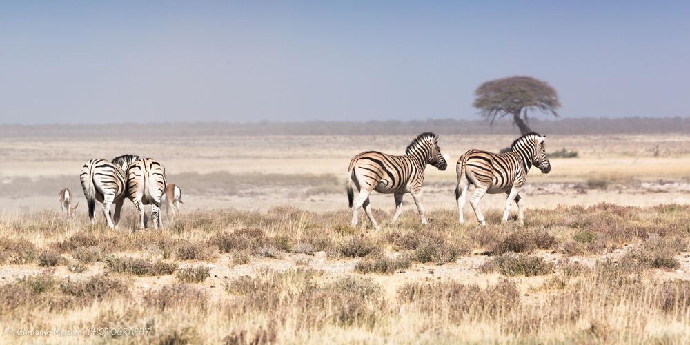 Namibie- 7784.jpg