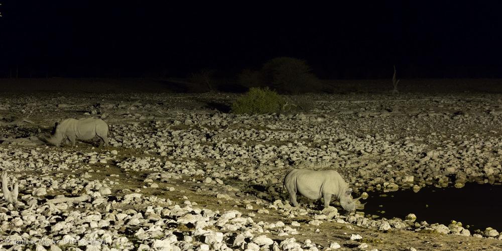 Namibie- 7170.jpg