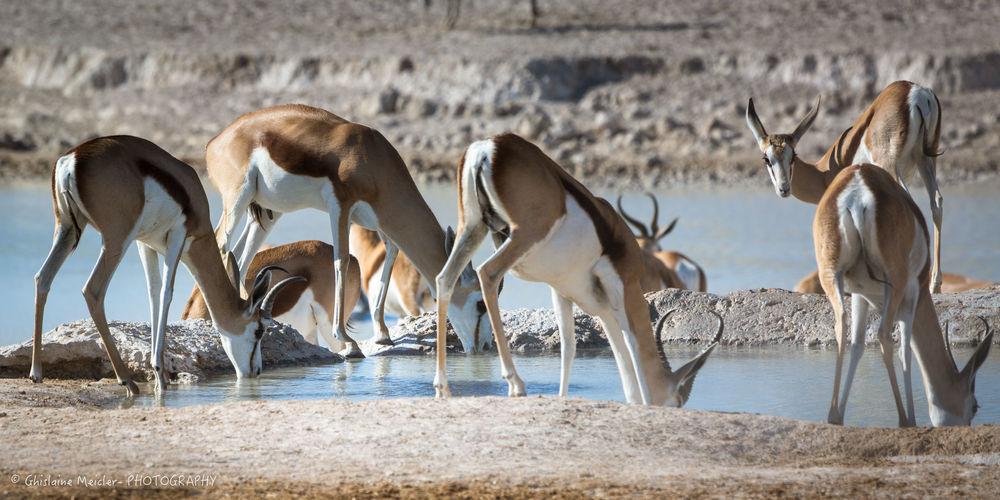 Namibie- 7827.jpg