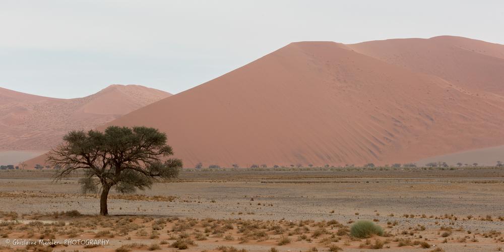 Namibie- 12691.jpg