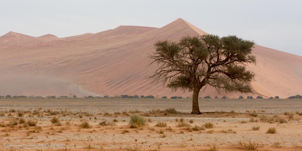 Namibie- 12662.jpg