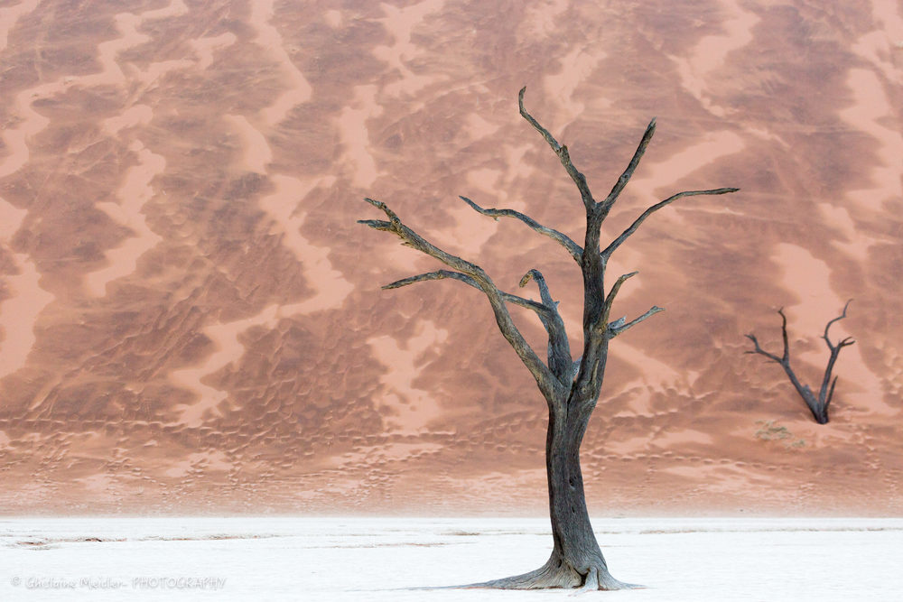 Namibie- 12386.jpg