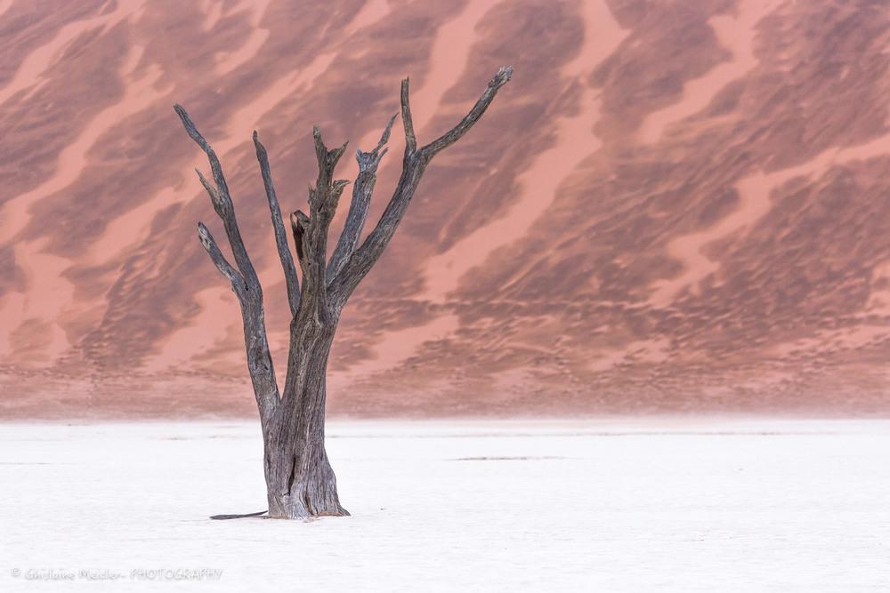 Namibie- 12406.jpg