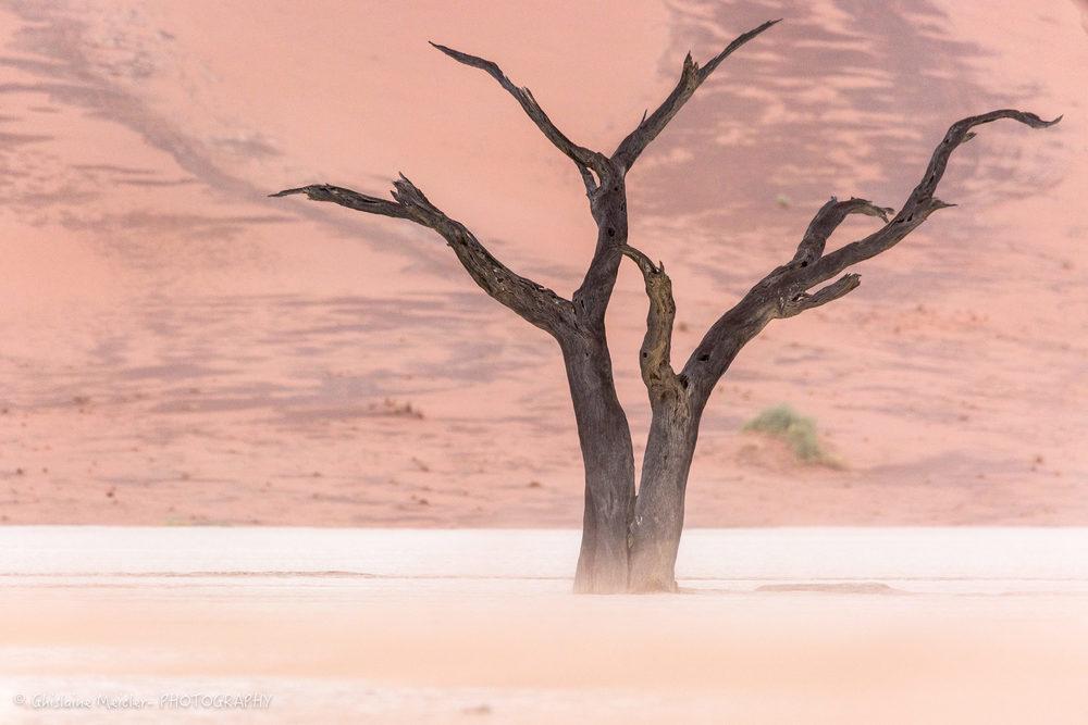 Namibie- 12440.jpg