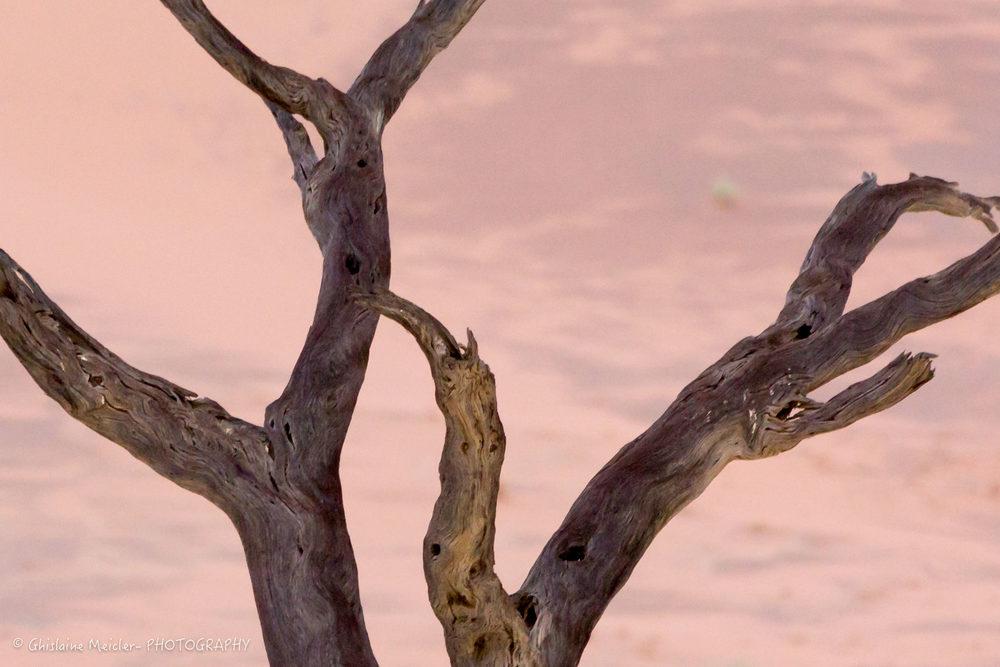 Namibie- 12439.jpg