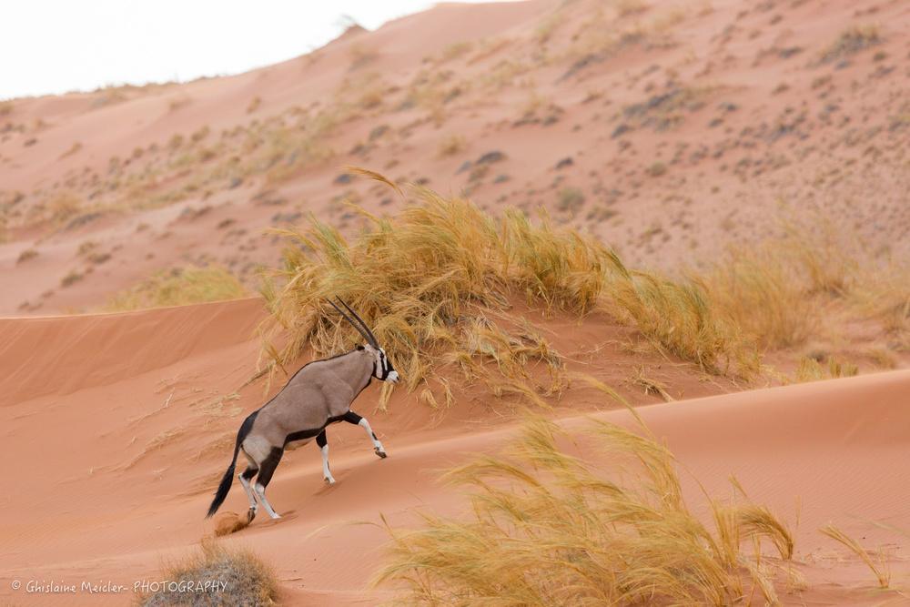 Namibie- 12783.jpg