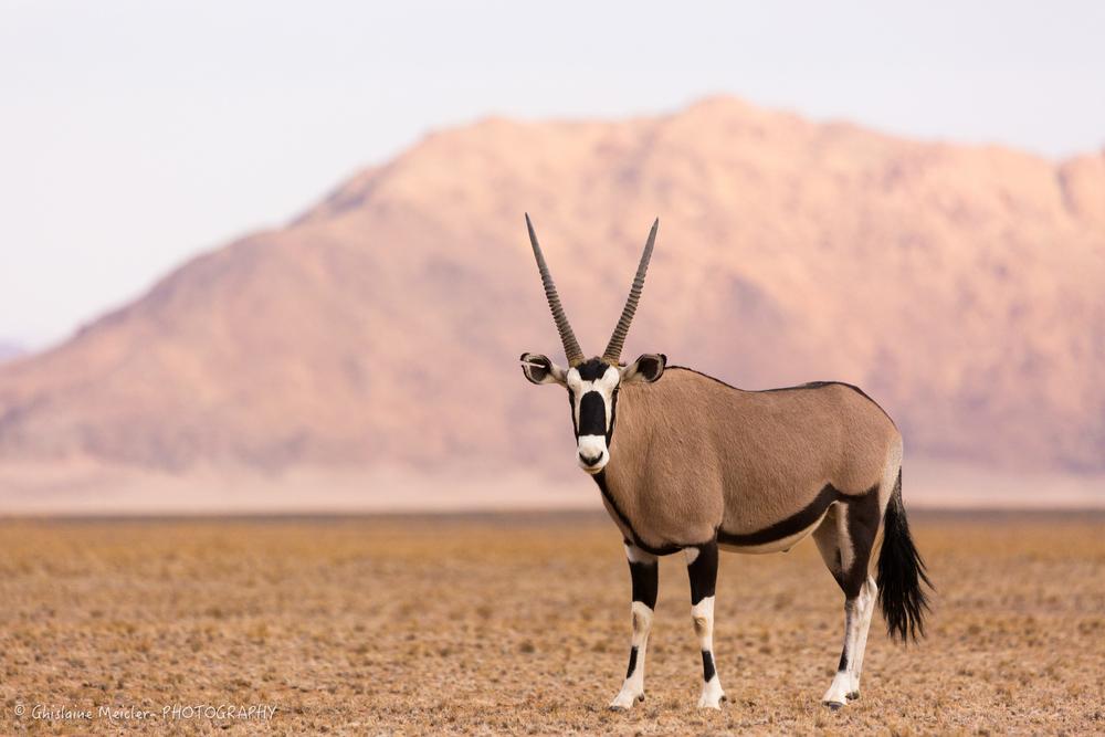 Namibie- 12763.jpg