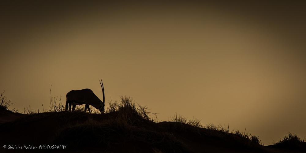 Namibie- 13060.jpg
