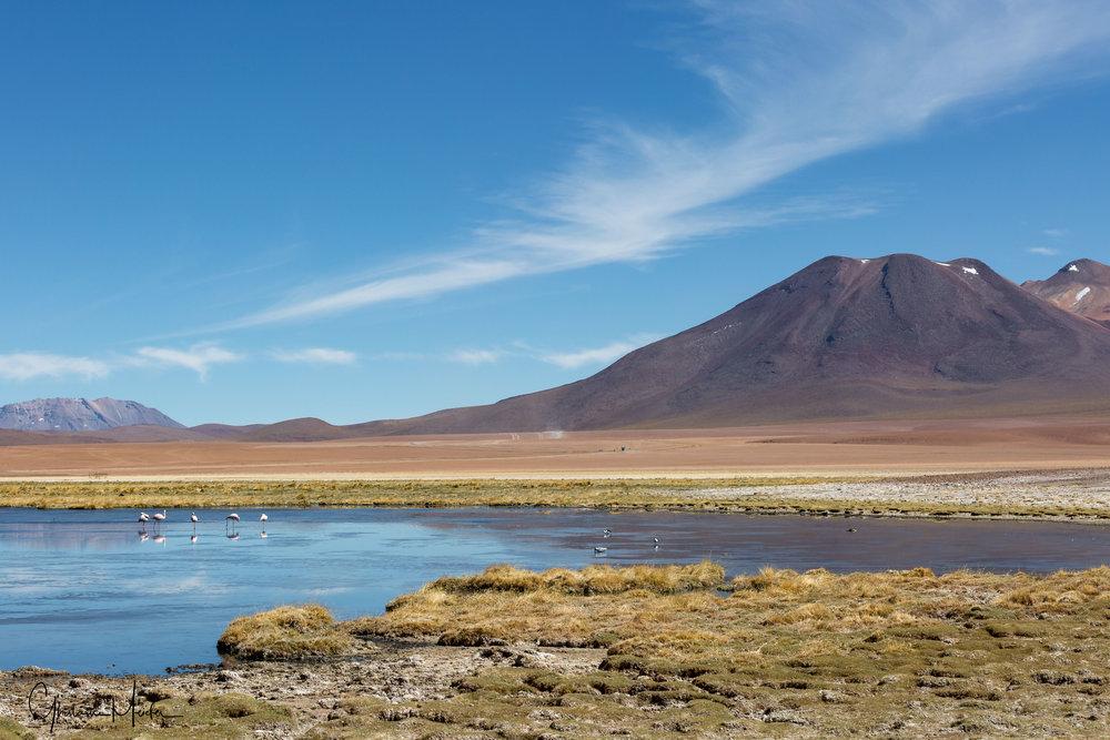 Chili- 34985.jpg
