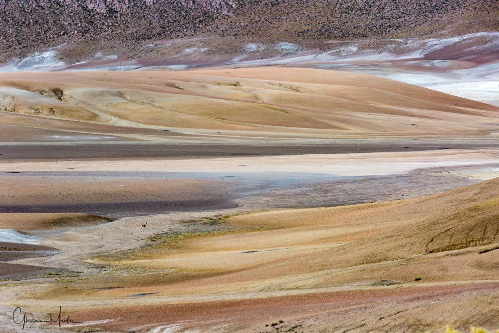Chili- 34839.jpg