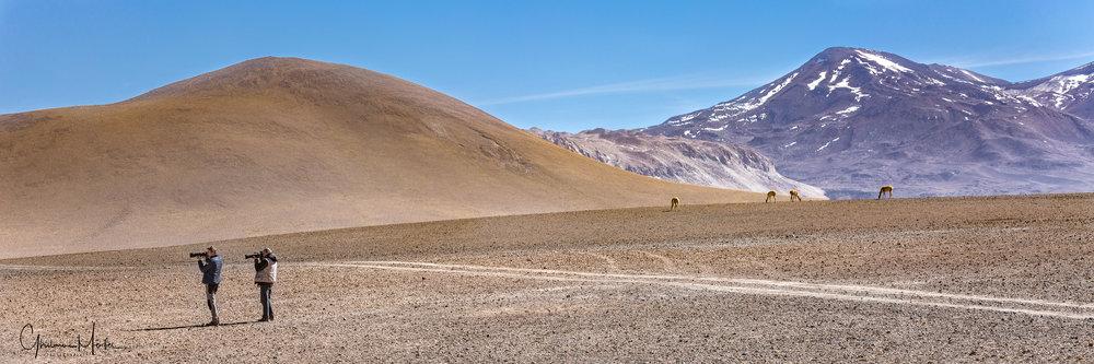 Chili- 34902.jpg