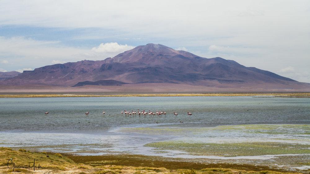 Chili- 35320.jpg
