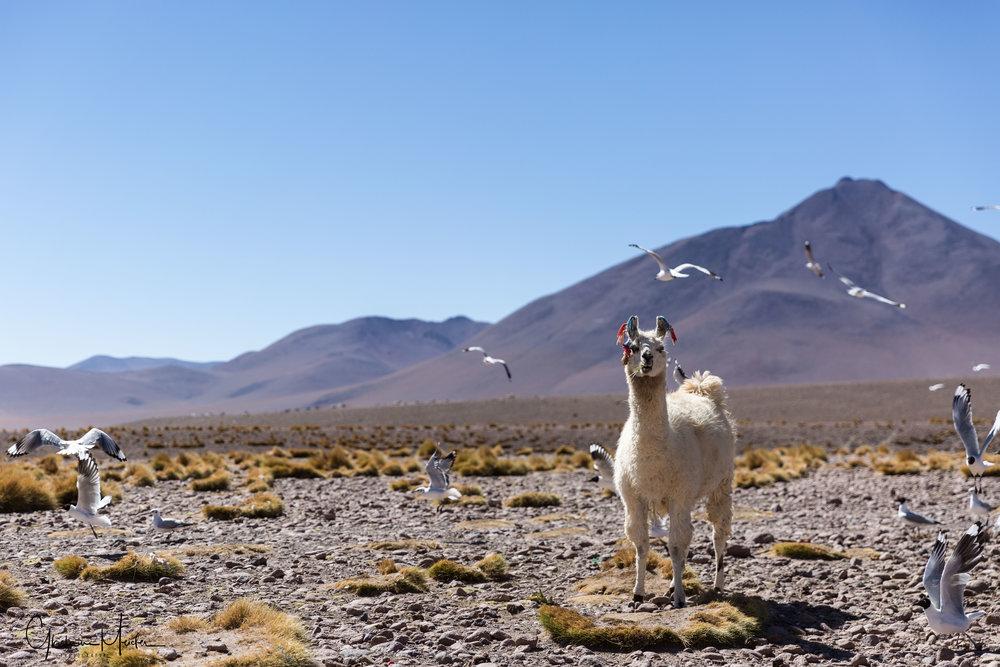 Chili36348.jpg