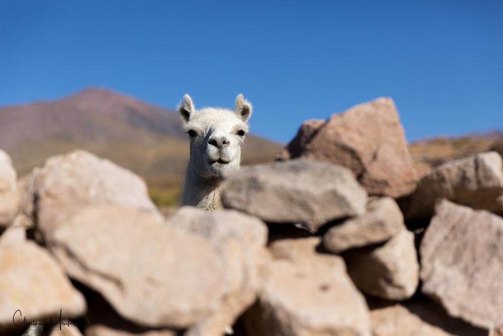 Chili- 42541.jpg