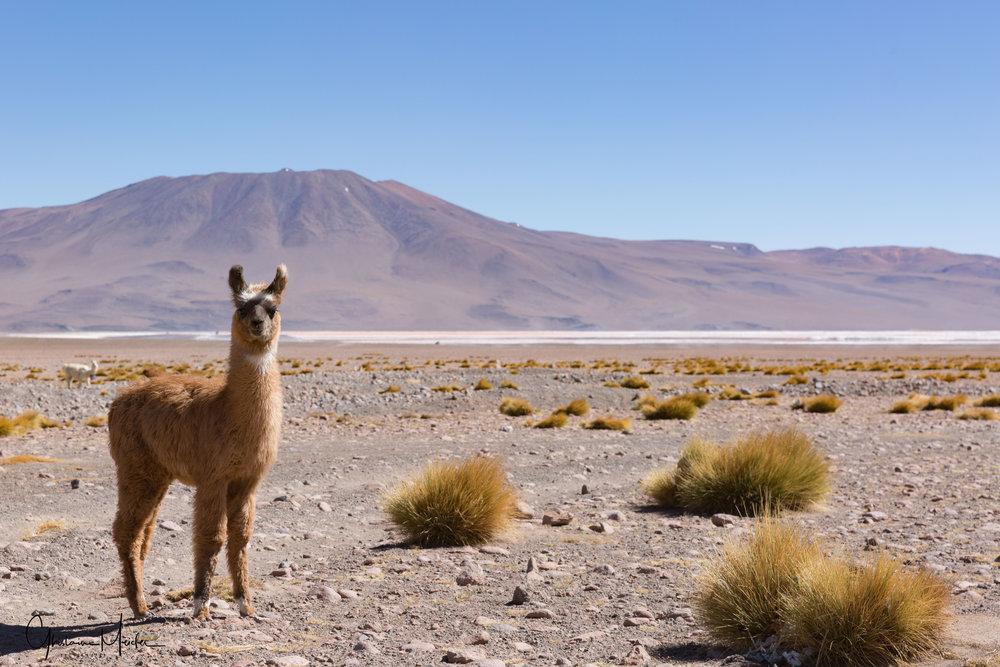 Chili36387.jpg