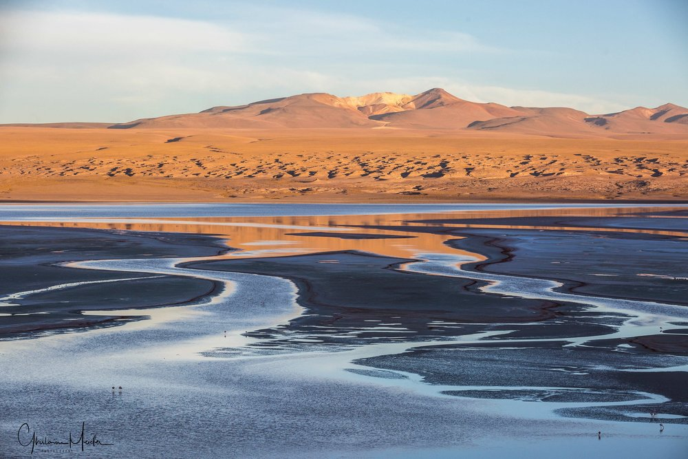 Chili36184.jpg