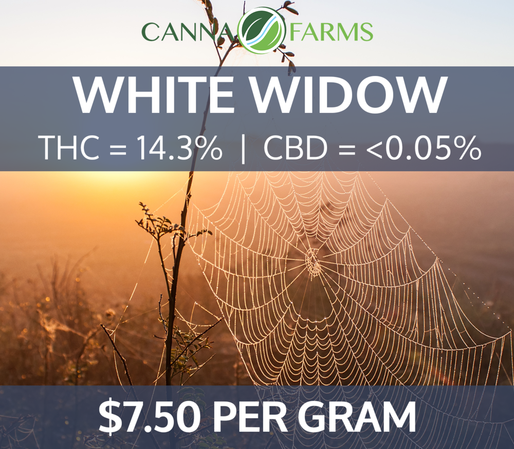 White_Widow_14.3THC_0.02CBD_7.50PERGRAM.png