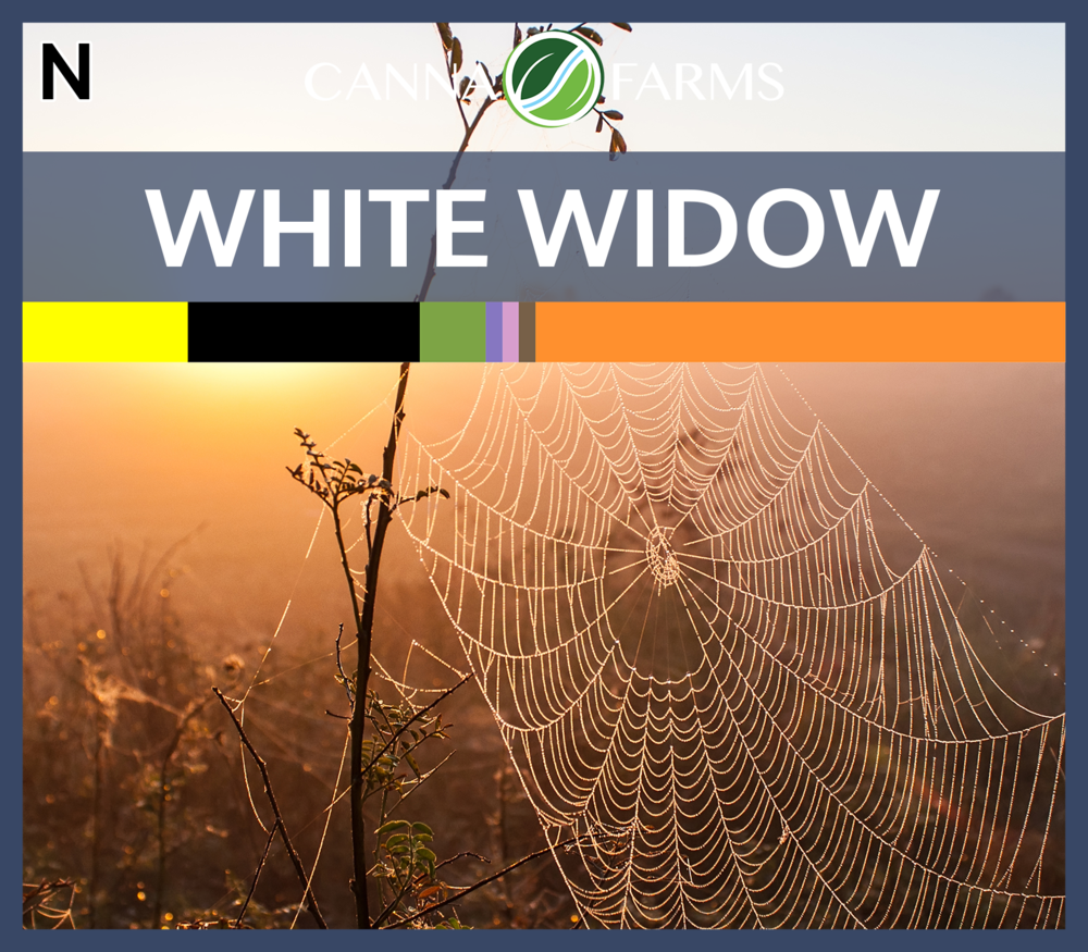 White_Widow_Blank.png