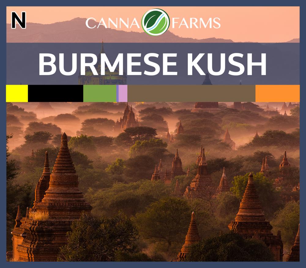 Burmese_Kush_Blank.png