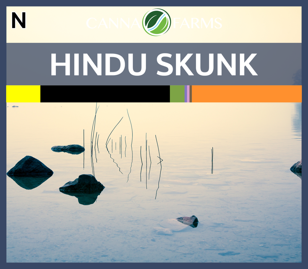 Hindu_Skunk_Blank.png