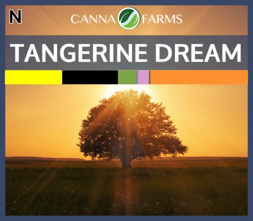 Tangerine_Dream_Blank.png