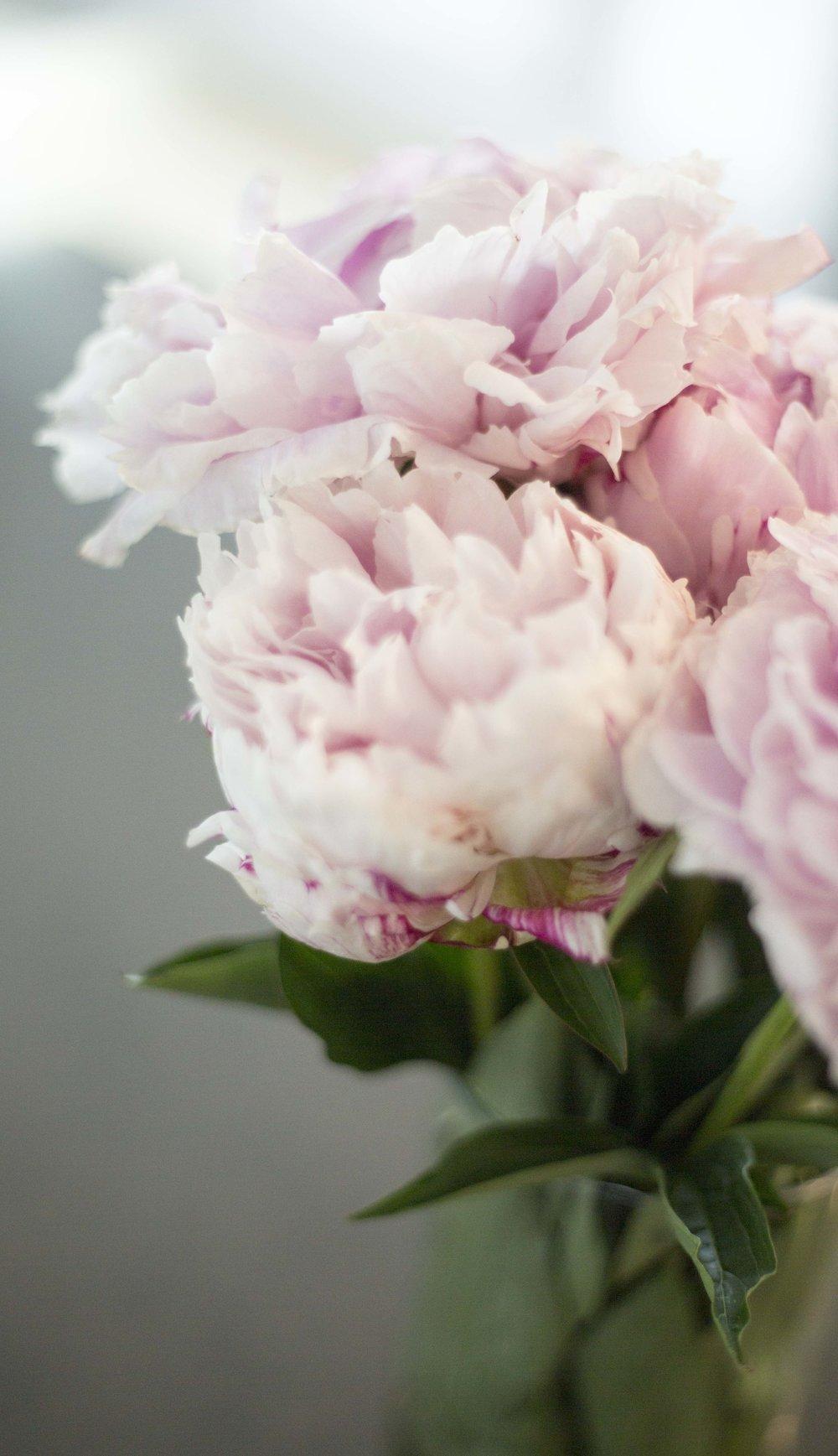 Light pink peony (1)