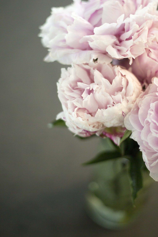Light pink peony (2)