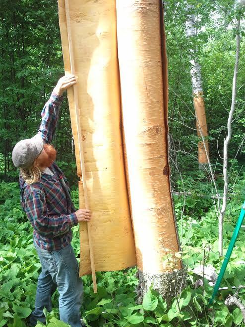 bark peel 4.jpg