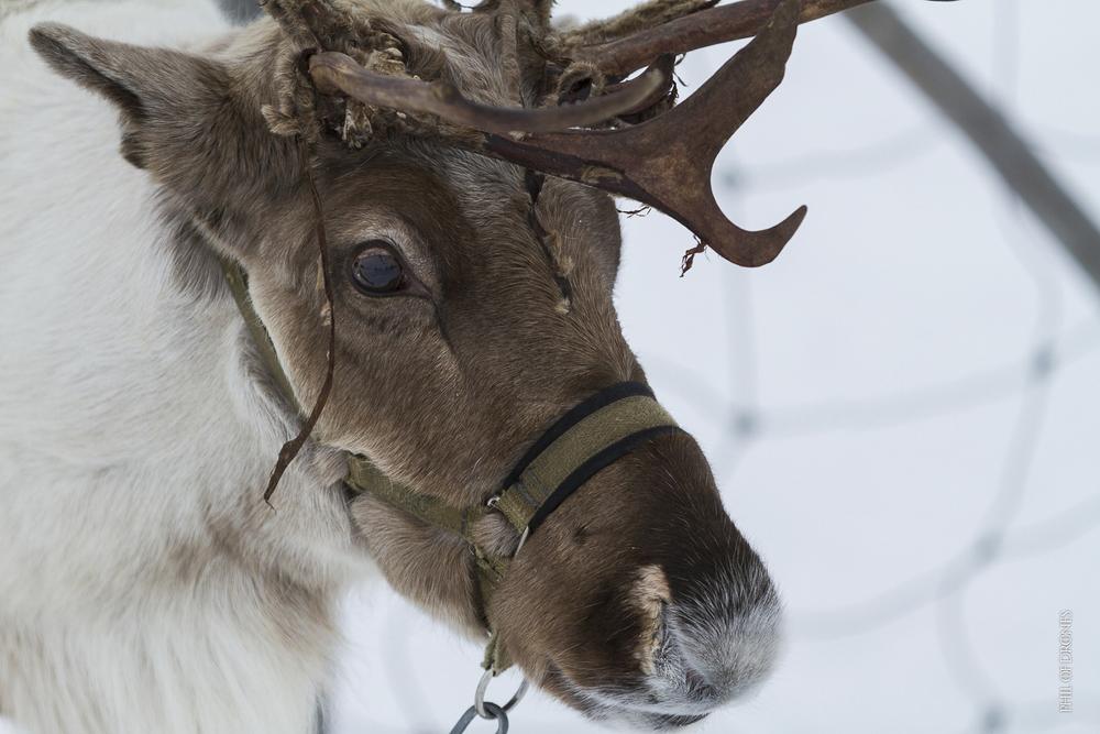 Laponie 2014-1-PhM-4.jpg