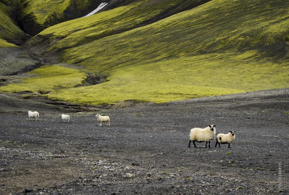Islande 2013-2-PhM copy.jpg