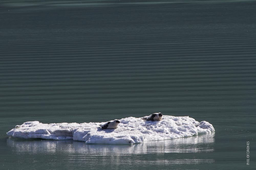 19-08 ice fjord-8-PhM.jpg