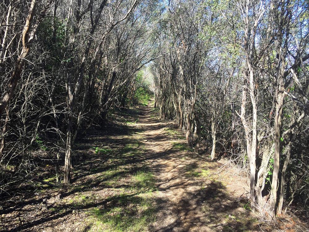 backbone-trail-trailnamebackstroke-3680.jpg