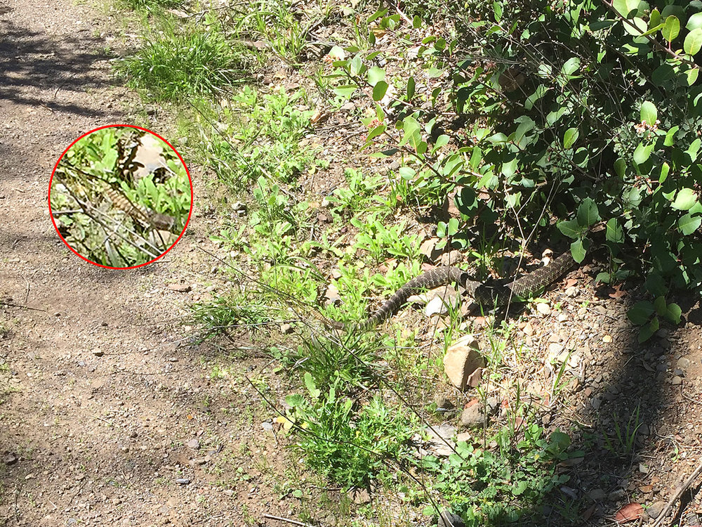 backbone-trail-trailnamebackstroke-3690.jpg