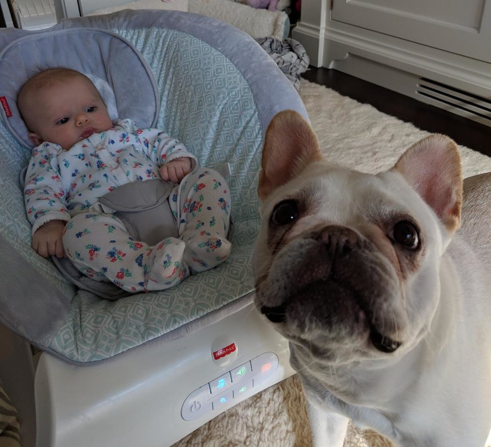 A client's adorable baby and dog from Pitter Patter Parenting.
