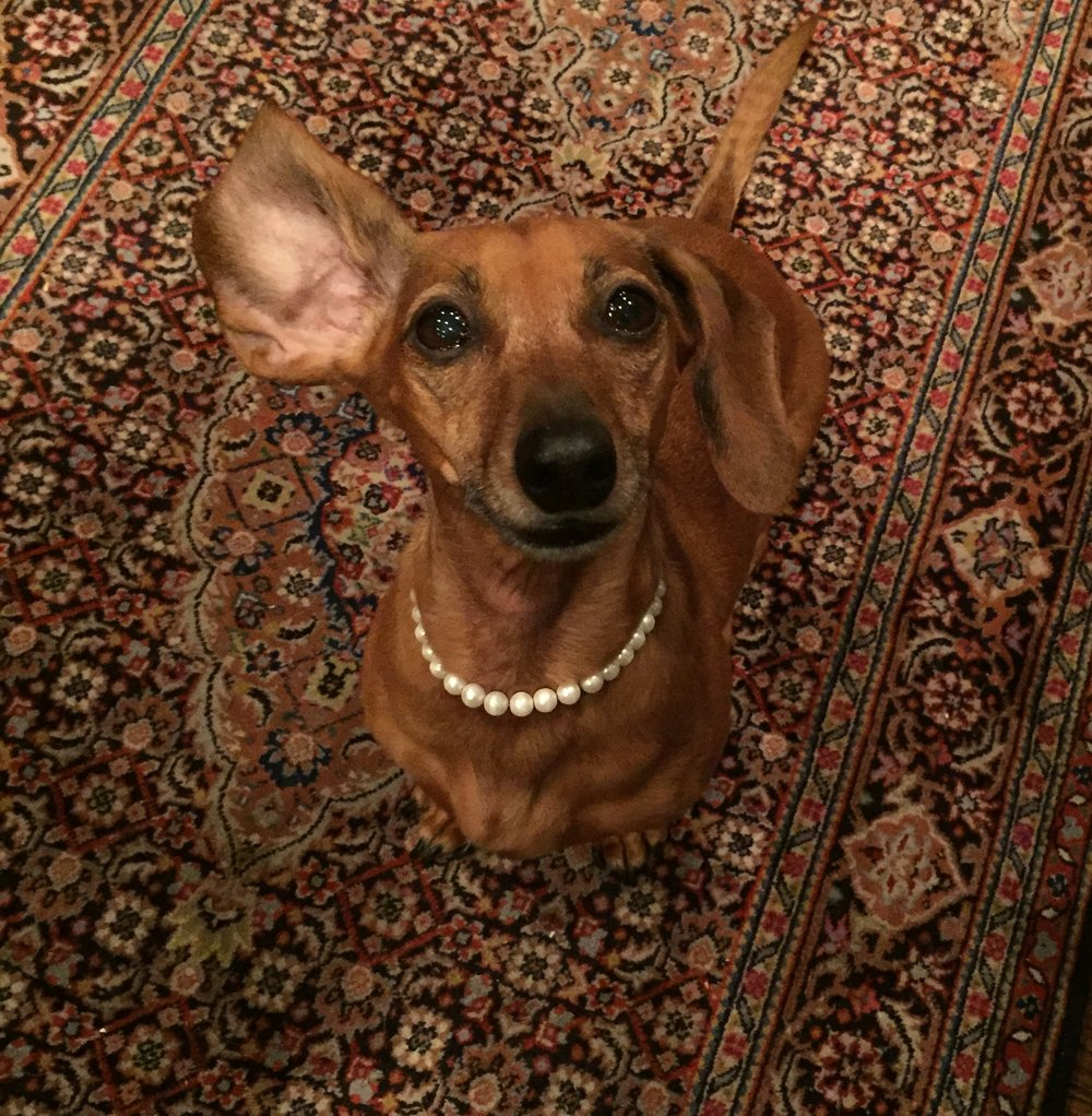 Hanging with Zellie... - This is my little heartbeat, my miniature dachshund, Zellie. When I'm not out and about, you'll find me snuggling at home with my comic relief - she keeps me laughing through everything!