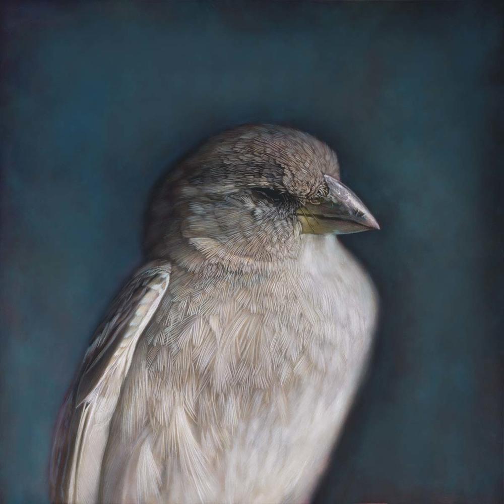 House Sparrow Female.jpg