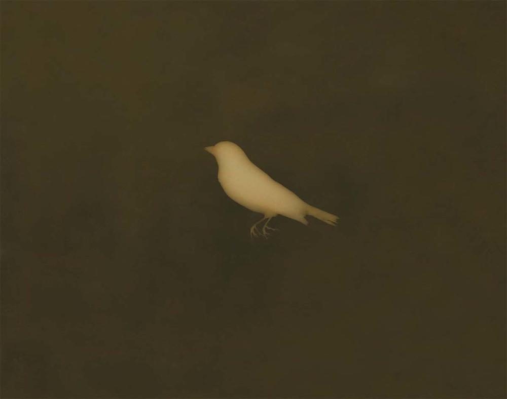lesser Goldfinch final .jpg