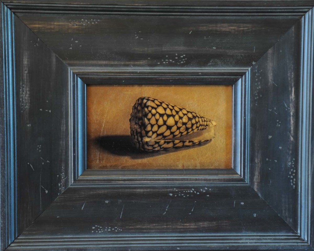 Cone Shell after Rembrandt