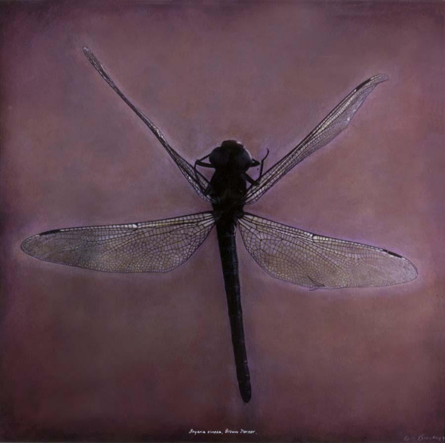 37. Boyeria vinosa,<BR>Brown Darner Dragonfly