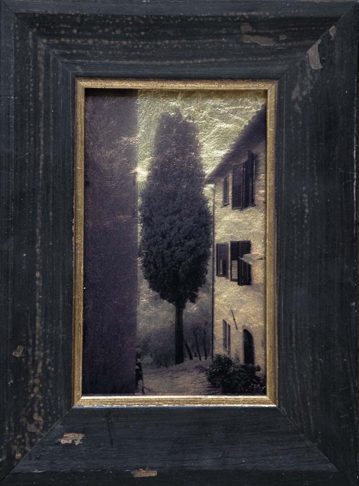 Cyprus Tree, Tuscany