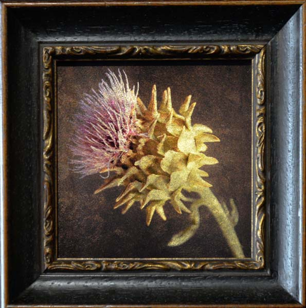 Scotch Thistle II