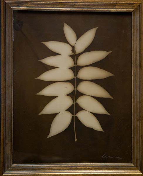 Botanical (13 Pointed Leaf)