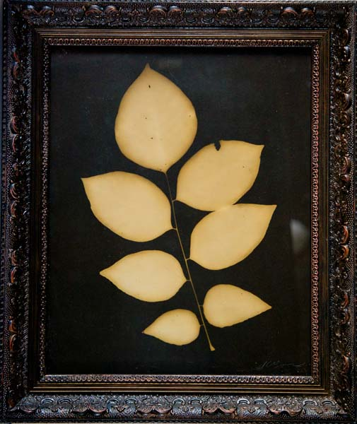 Botanical Bulbus, 7 Pointed Leaf