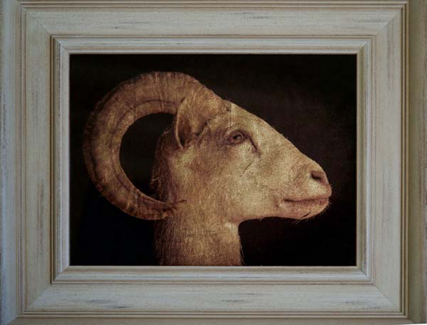 Longhorn Sheep Head
