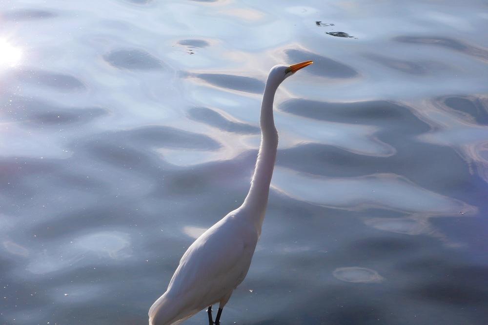Lake Merritt, CA