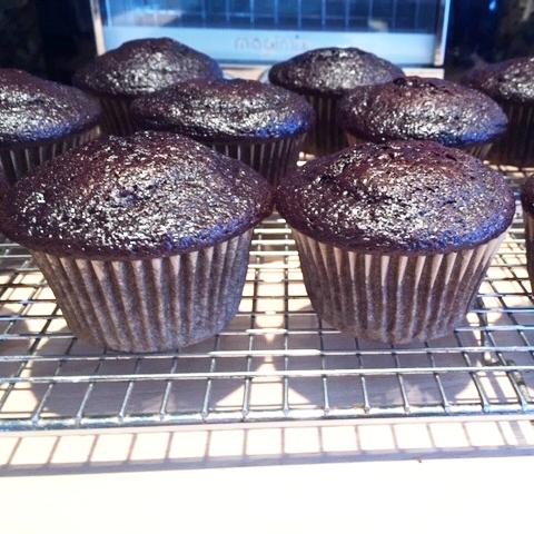 choc. cupcakes cooling.jpg